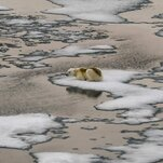 Arctic Sea Ice Hits Annual Low, but It's Not as Low as Recent Years