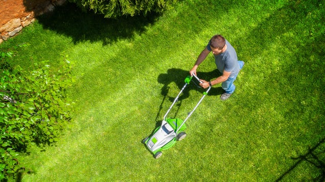Why Lawns Are Terrible (and What You Can Do About Yours)