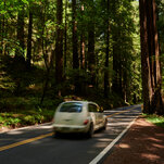 The Quiet Strength of an Old-Growth Forest