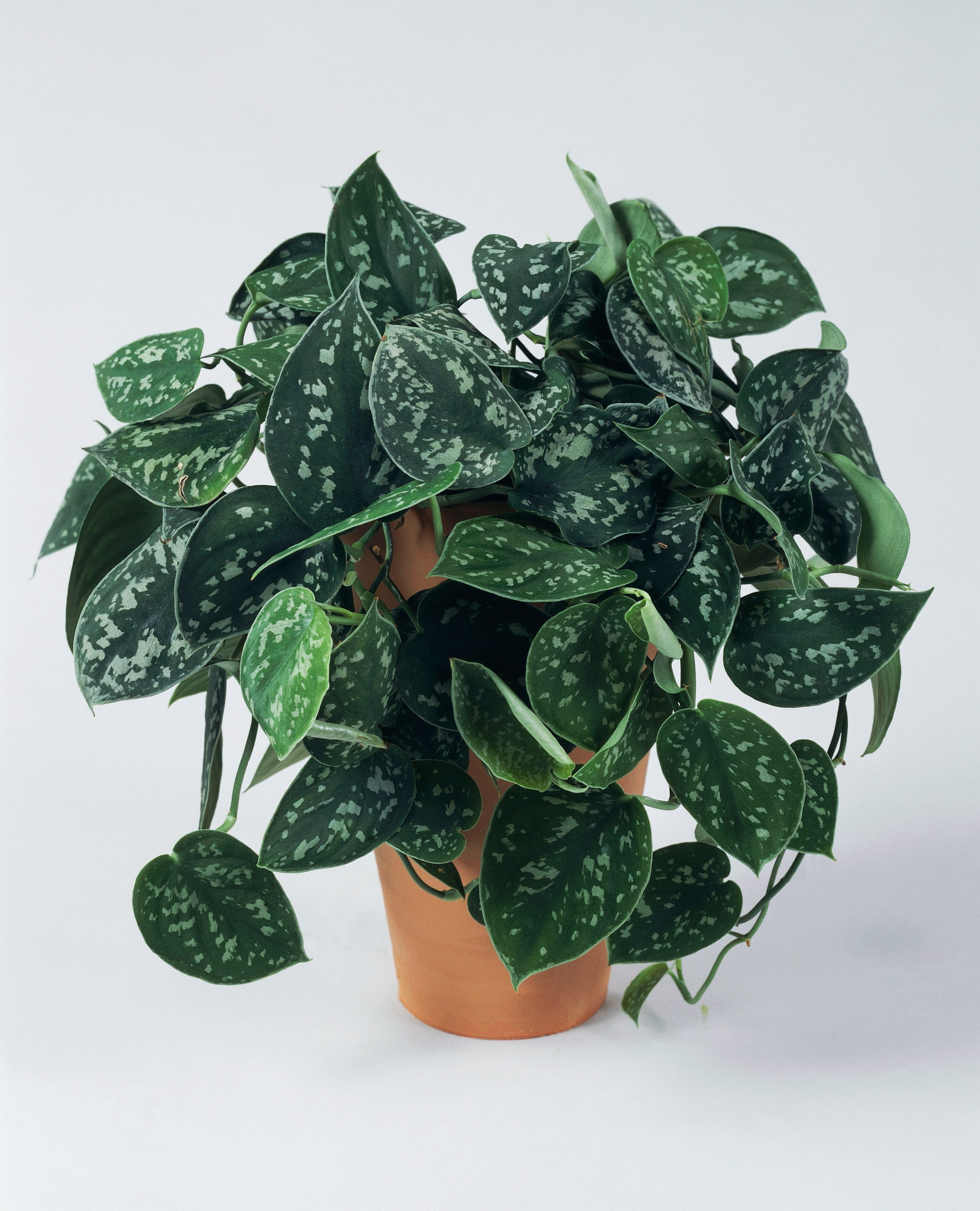 Think You Love Houseplants? This One Just Sold for Almost $20,000