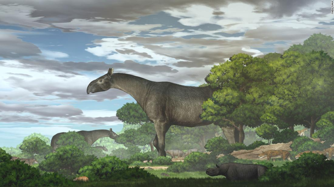 A giant prehistoric rhino was the biggest land mammal to walk the Earth